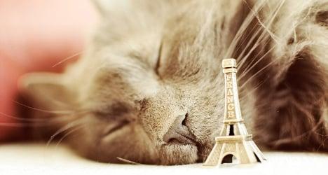 VIDEO: Paris set to get its first 'cat hotel'