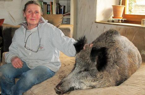 Hunter kills woman's pet wild boar