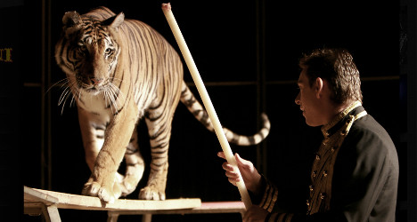 VIDEO: Circus tiger mauls tamer mid-act