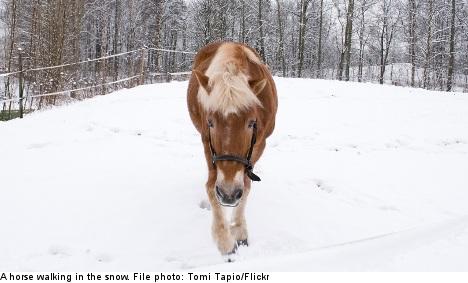 Swedish horse owners face abattoir queues