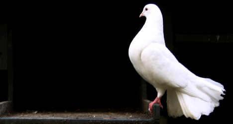 Animal activists slam Pope's dove stunt
