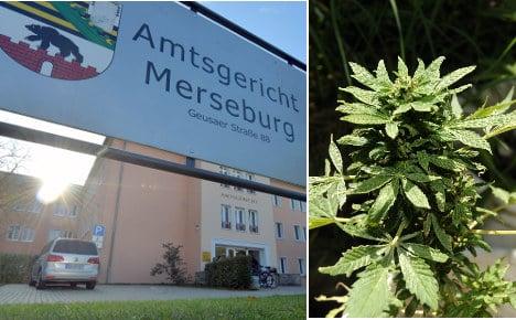 Gardener, 63, fined for accidental cannabis bush