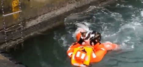 VIDEO: Cat rescued from underneath ferry