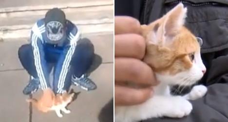 French Kitten chucker jailed for animal cruelty