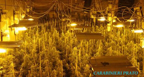 Police bust 'enormous' cannabis farm in Italy