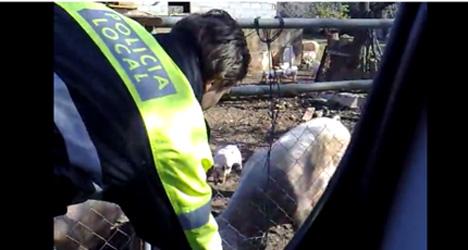 VIDEO: Police slammed for pepper spraying pigs