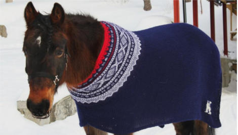 Horses asked how they prefer to stay warm