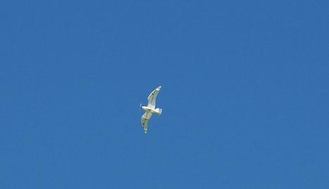 Norway artist develops seagull drone