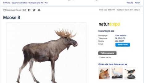 Man puts stuffed elk family on 'Norway's eBay'