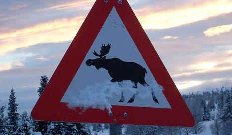Expert calls for six-digit fines for elk deaths