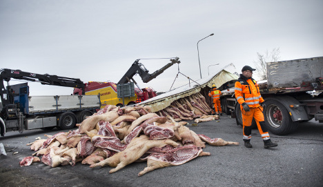 Truck collapse sends 200 frozen pigs flying