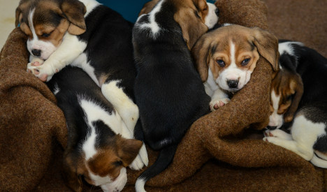 Puppies too young to travel rescued from truck