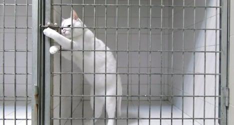 VIDEO: France's feline version of Harry Houdini