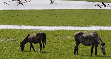 Wild horses breathe life into dying landscape