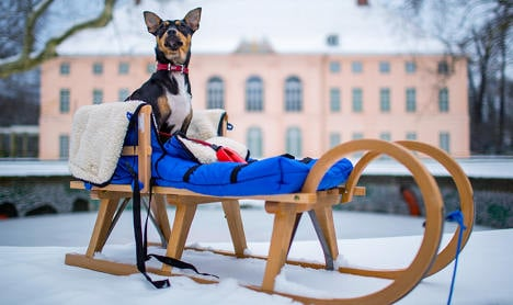 Dog tax hits Berlin tourists
