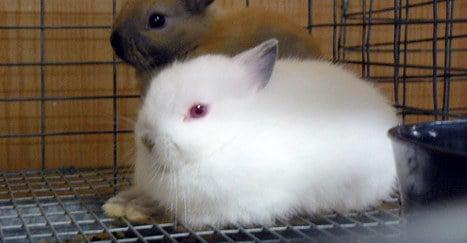 Rabbits slaughtered as part of 'Satanic ritual'
