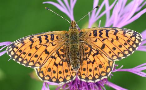 Study: third of German species under threat