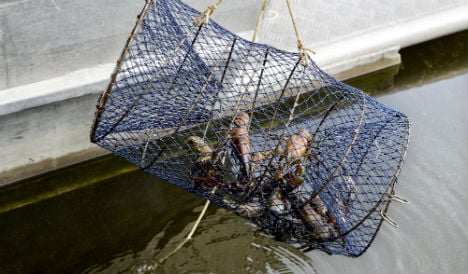 Drowned puppies found in crayfish cage