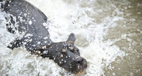 Man drowns trying to save dog from well