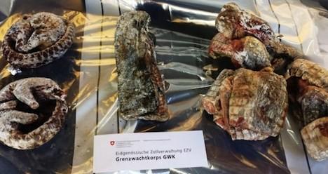 Armadillo and crocodile meat seized at border