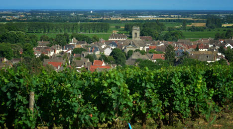 Burgundy 'will be ruined by wind farms'