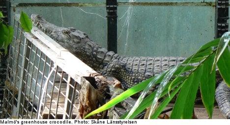 Swedish croc find leaves owner with huge bill