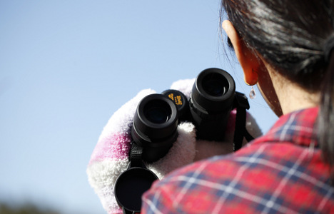 Swede fined for flashing birdwatcher from tower