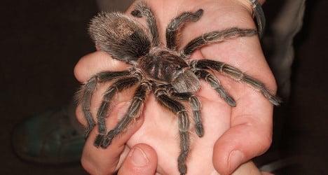 'Tarantula trafficker' snared in huge bug bust