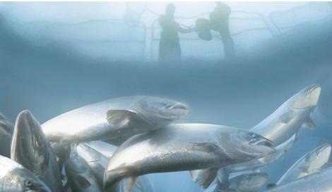 Marine Harvest profits double