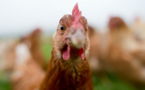 'Free range' chicken farmer tricks customers