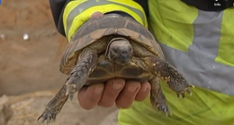 Thousands of reptiles killed in warehouse blaze