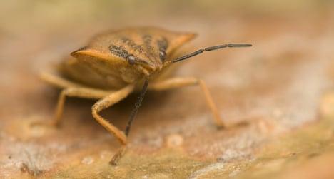 Bedbug plague spreads across Spain