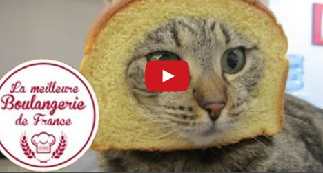 VIDEO: Boulangerie cat becomes star of the web