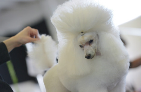 In Pictures: Swedes flock to dog grooming show