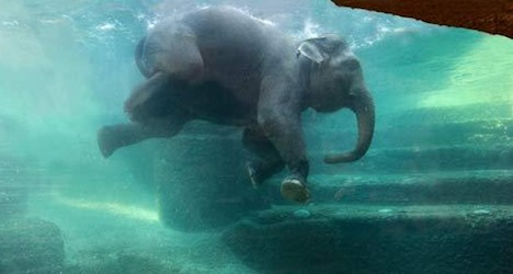 Zurich Zoo opens new home for elephants