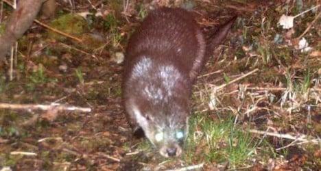 Otter marks Swiss comeback in Geneva