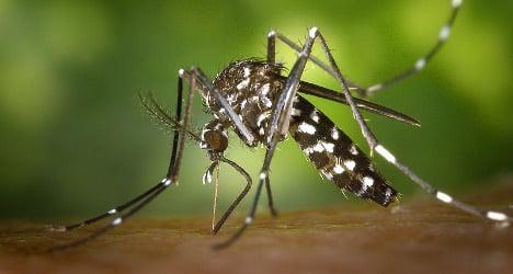 Concern in France over risk of chikungunya virus