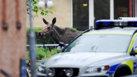 Kids flee as elk breaks into woodwork class