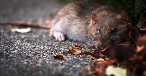 Woman fed gran rat poison in inheritance bid