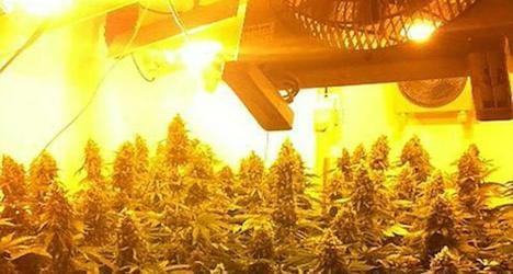 Police bust pot 'growroom' in Vienna