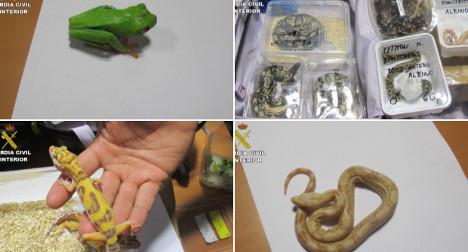 Man smuggles pythons on to Spanish plane