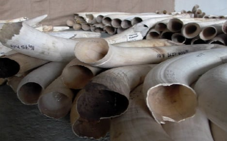 Record tonne of ivory sold at auction in France