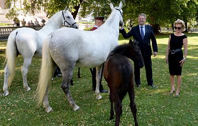 Lipizzaner horses roam Vienna's Burggarten