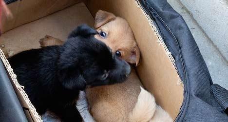 Vienna seeks ban on Internet puppy sales