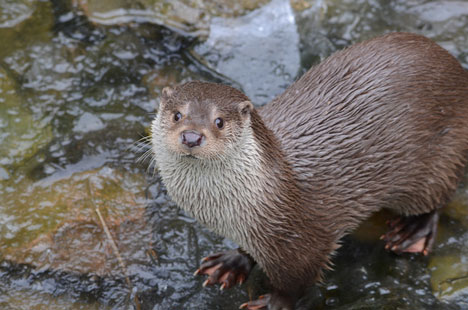 Wildlife roundup: Dead seals and new otters