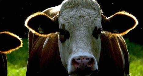 Cows kill German dog-walker in Tyrol