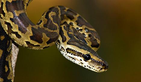 Geneva snake smuggler apprehended in Basel