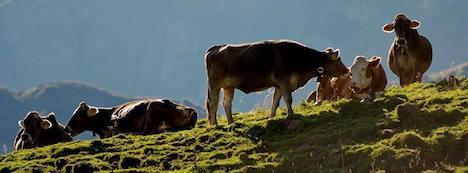 Austria opposes new EU bio farm rules