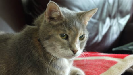 Is this expat cat the world's oldest?