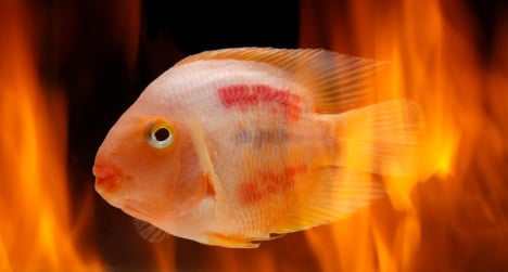 Pets perish in shop fire horror